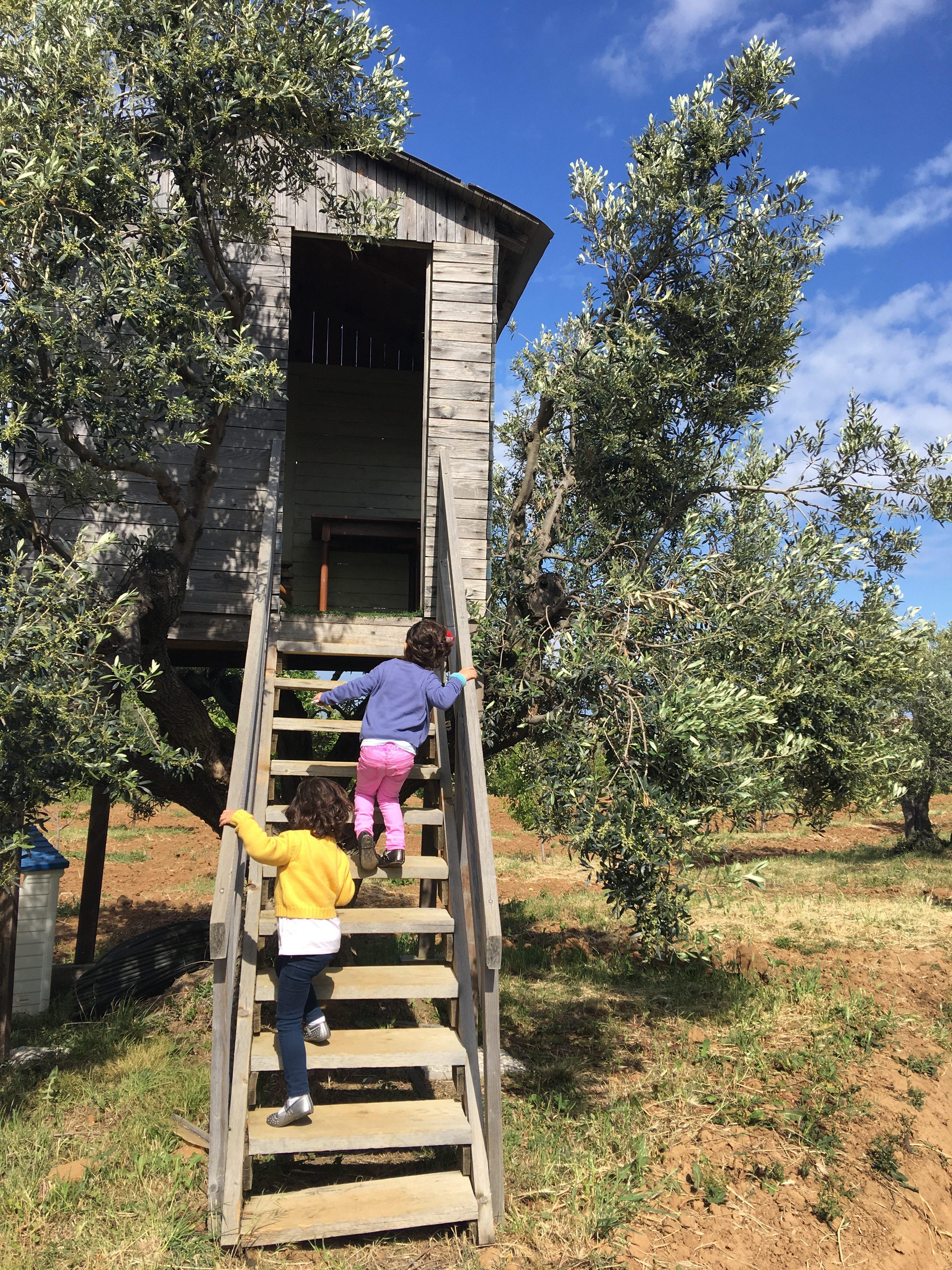 casette sugli alberi al Podere l'Agave di San Vincenzo